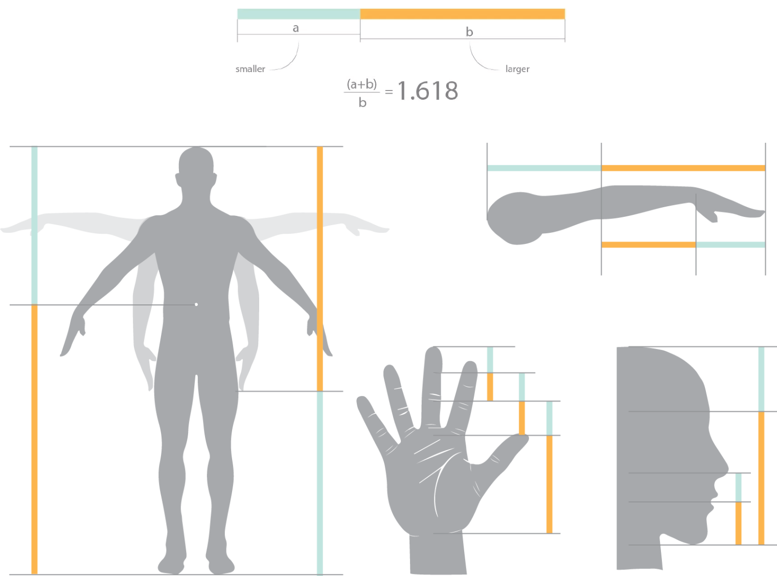 Golden Ratio in body parts