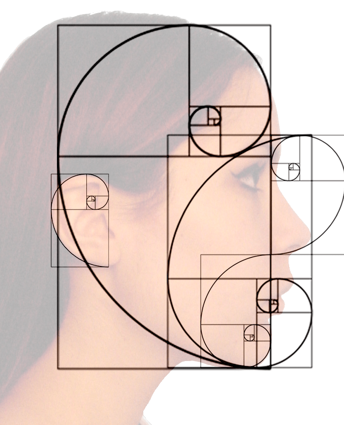Golden ratio spiral in face profile