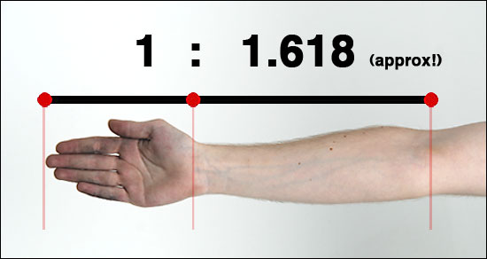 Golden Ratio human arm